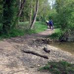 La Seine à vélo, un axe majeur de mobilité
