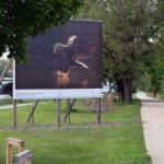 En Alsace, la photo animalière s'expose… en plein air!